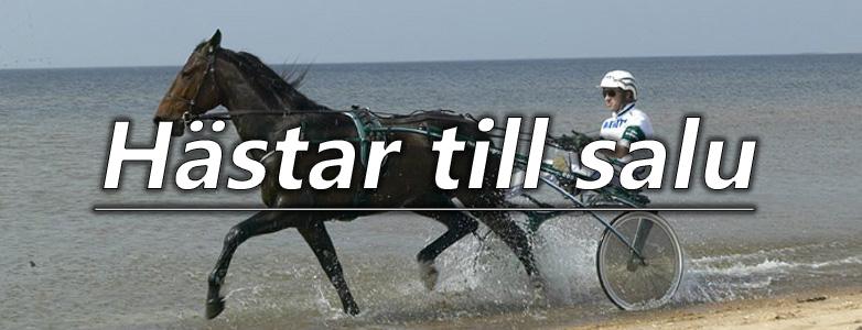 Hästar till salu kopia
